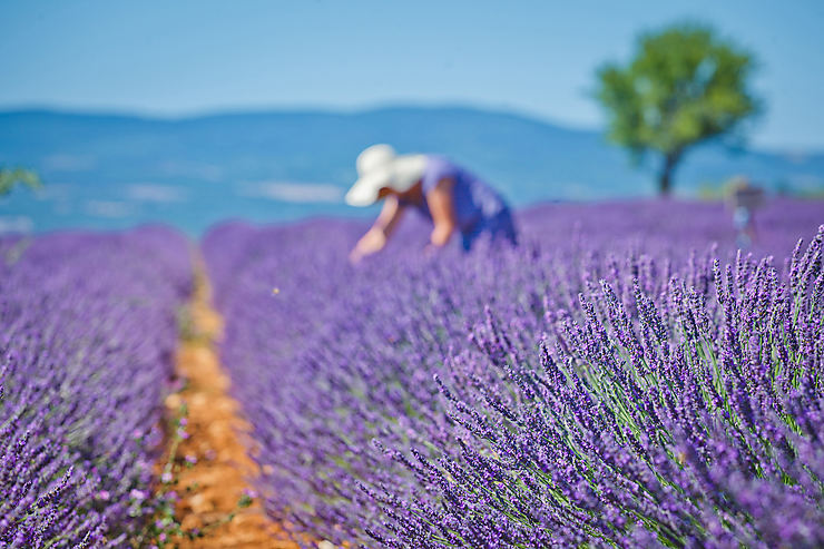 Lavender Bursary - Credit Guide du Routard