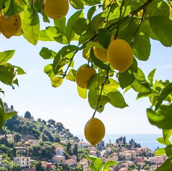 Lemons of Menton - © avocat.brunetducos