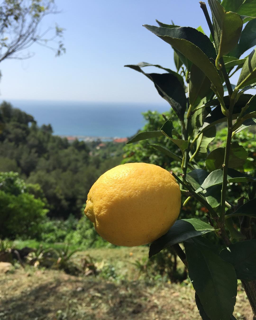 Tourism in Menton: what not to miss - Credit La Maison du Citron