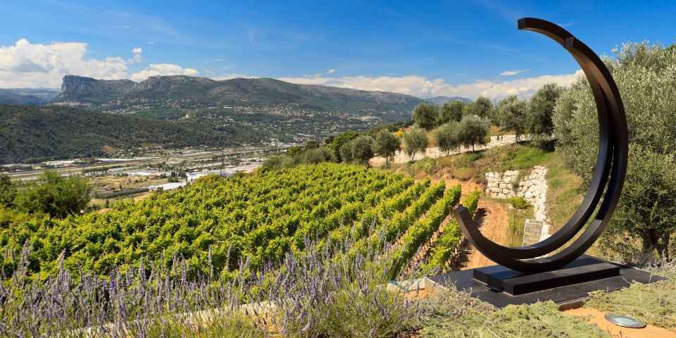 5 vineyards of Bellet near the Hotel Florence Nice - Domaine de Toasc Nice - Credit Hervé Fabre