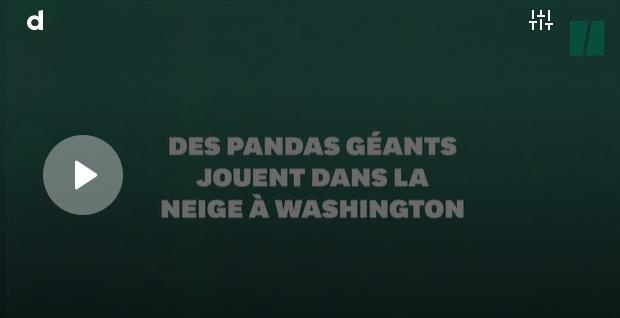 Les Pandas et le Revenue Management Hôtelier