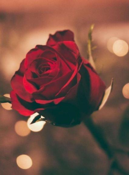 Nos packages Romance pour votre Saint-Valentin