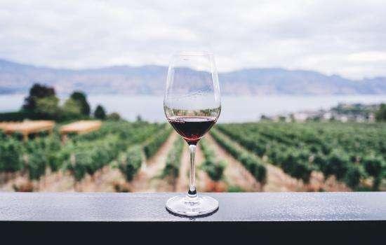 5 vignobles de Bellet proches de l'Hôtel Florence Nice