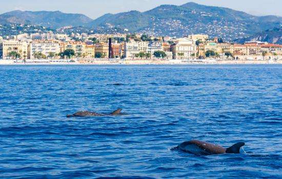 Tourisme responsable : visitez la Côte d'Azur par la mer sans polluer !