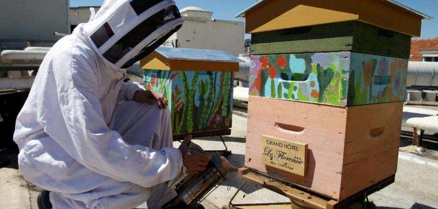 Green Hotel Florence Nice, un toit pour nos abeilles
