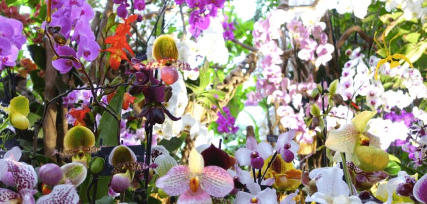 Thousand and one orchid - Le Jardin des Plantes