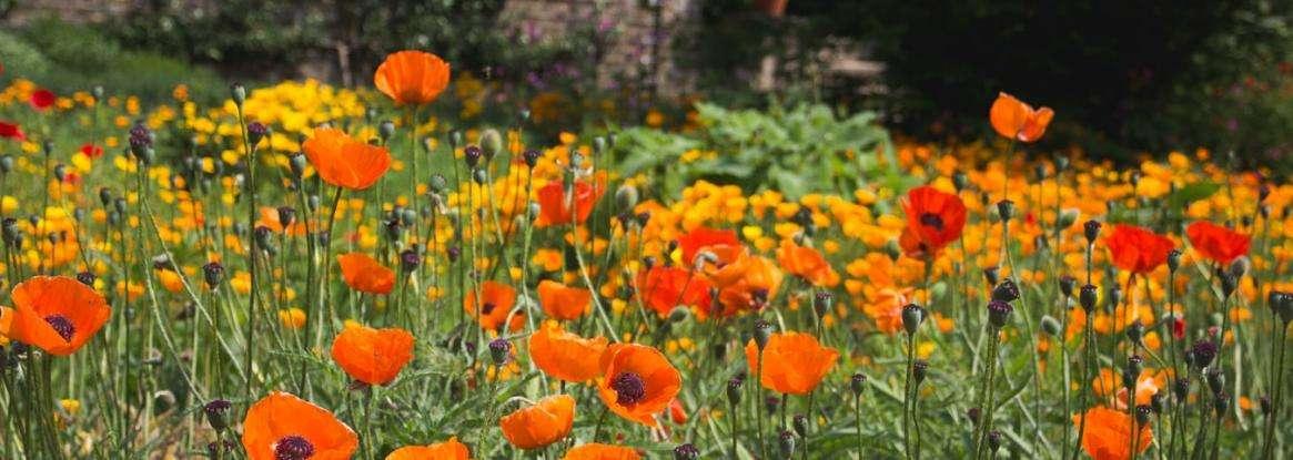 Focus on the Jardin des Plantes du Mans