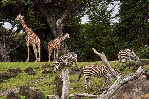 Tour du monde virtuel animalier au Jardin d'Acclimatation