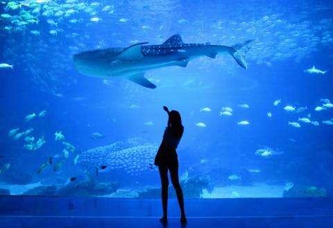 Magical moments for all ages at the Paris Aquarium